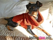 how-to-crochet-a-dog-sweater-tips-and-tricks-to-keep-your-pet-warm-1-227x171